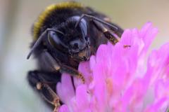 Błonkoskrzydłe (Hymenoptera)