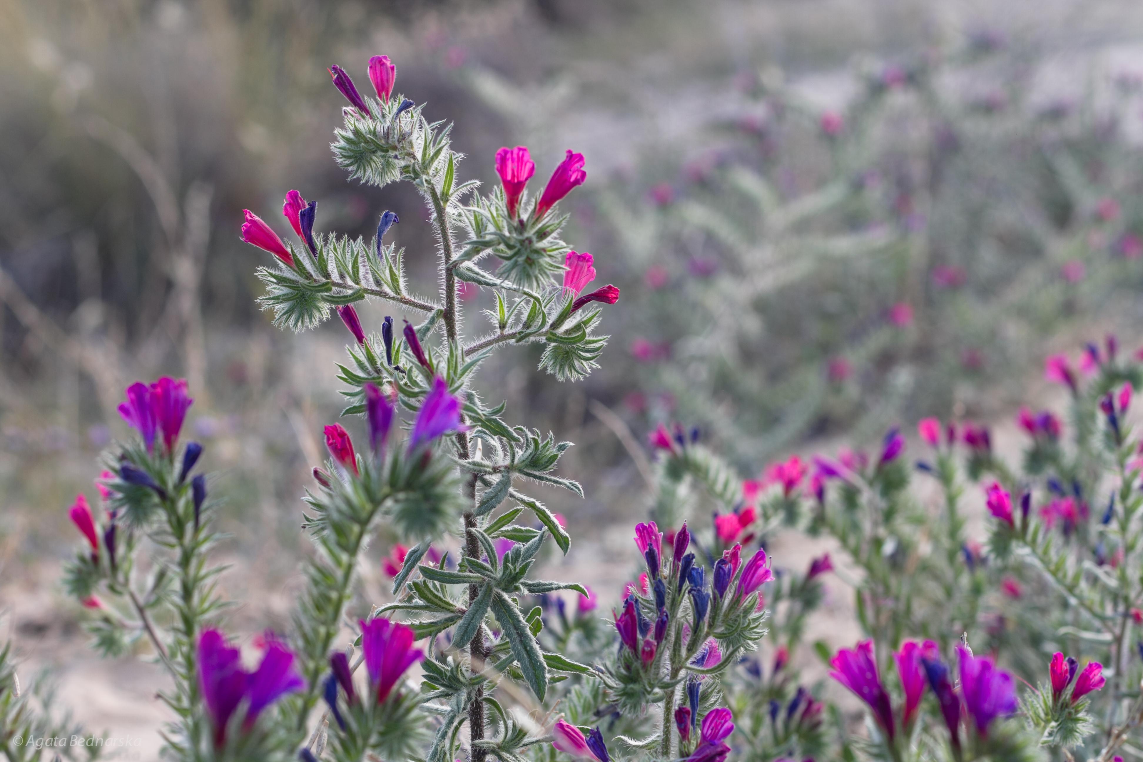 Flowers in Spain