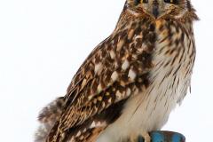 Ptaki (Aves)