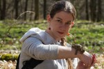 Ropucha szara (Bufo bufo) – gody
